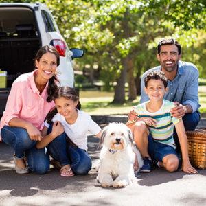 Vai viajar com seu pet nas férias? Confira 5 dicas imperdíveis!