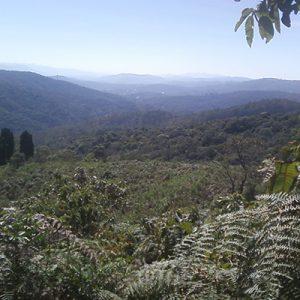 Serra da Cantareira: história e curiosidades
